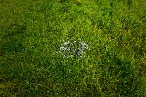 Grass 001
