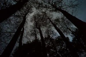 Trees001