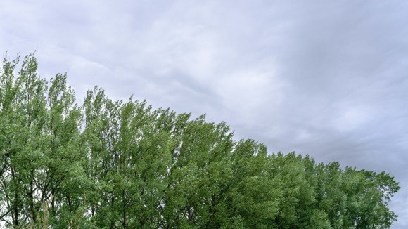 Poplar sky